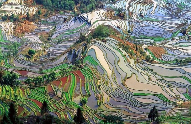 Sanatseverlere-İlham-Veren-Pirinç-Tarlaları- (4)