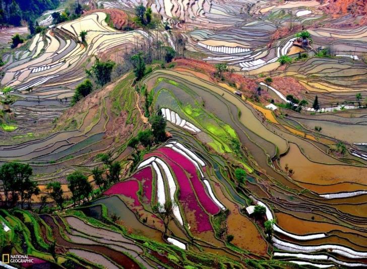 Sanatseverlere-İlham-Veren-Pirinç-Tarlaları- (5)