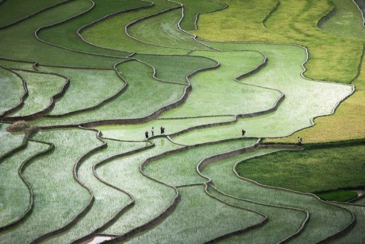 Sanatseverlere-İlham-Veren-Pirinç-Tarlaları- (6)