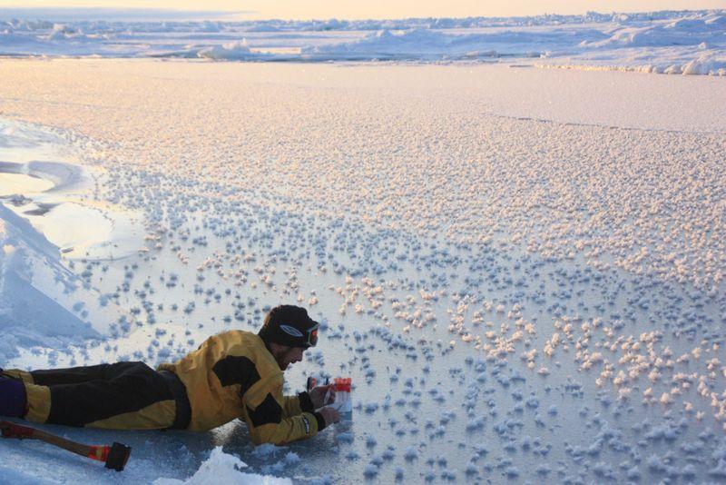 buz-ciceklerin-toplanmasi