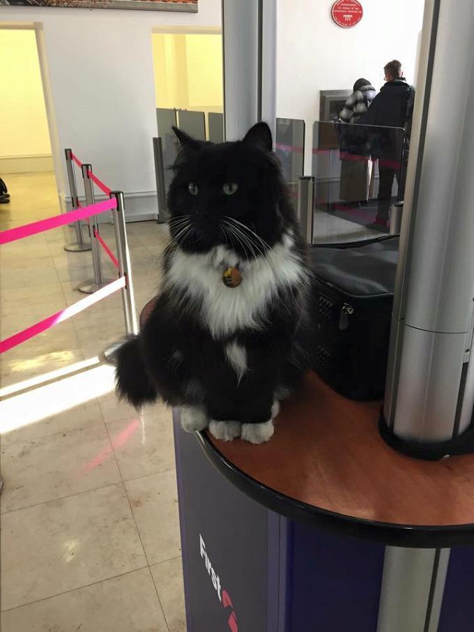 akıllı-kedi-felix