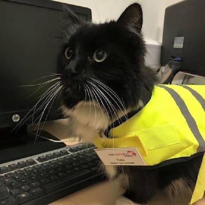 felix-guvenlik-gorevlisi-kedi