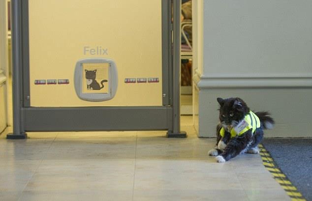 felix-huddersfield-tren-istasyonu-kedi