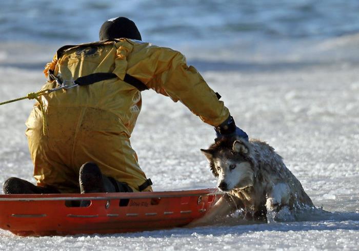 itfaiye-hayvanların-hayatını-kurtaran