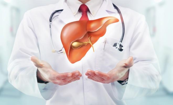 karaciğer-organı