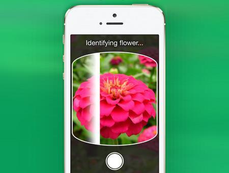 Cicek-Dunyasinin-Shazami-ile-Tanisin-LikeThat-Garden-Uygulamasi