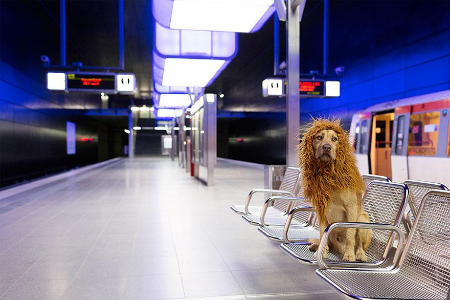 Evsiz-Bir-Köpeğin-Aslana-Dönüşme-Hikayesi-1