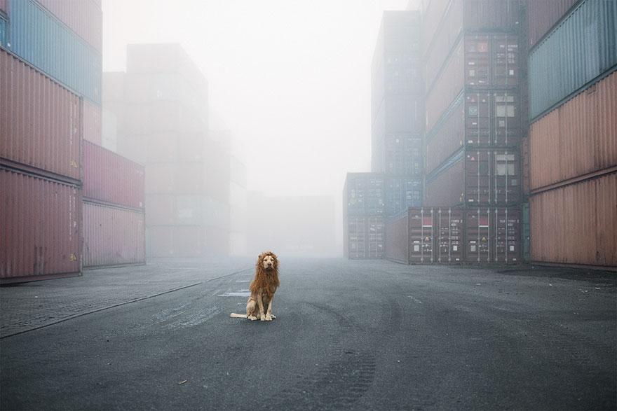 Evsiz-Bir-Köpeğin-Aslana-Dönüşme-Hikayesi-10