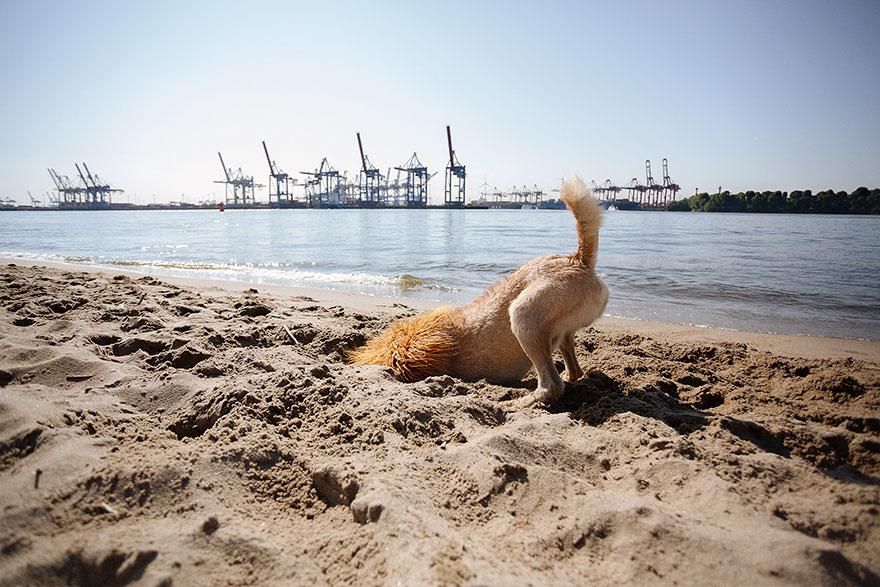 Evsiz-Bir-Köpeğin-Aslana-Dönüşme-Hikayesi-13