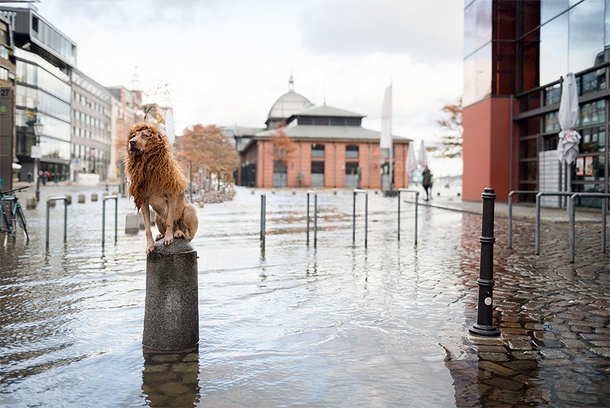 Evsiz-Bir-Köpeğin-Aslana-Dönüşme-Hikayesi-14