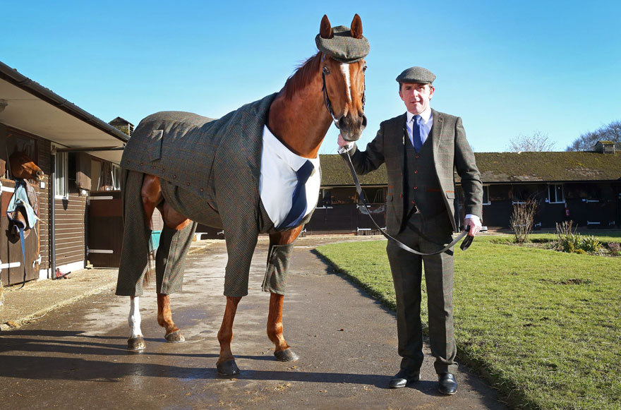 centilmen-gibi-giyinen-atlar