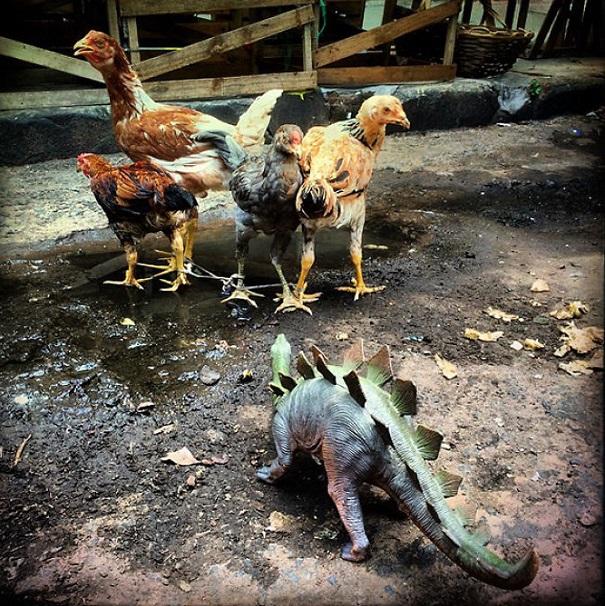 Gezi-Fotoğrafçılık-Oyuncaklar-Dinozorlar-Jorge-Saenz (23)