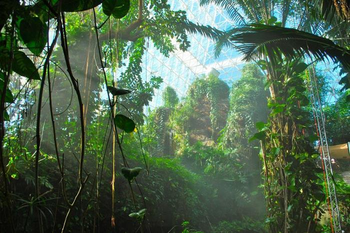 biyosfer-2-projesi-bitkiler