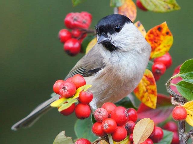 dünyada en fazla bulunan kuş türü