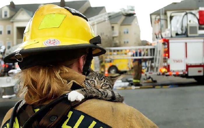 itfaiye-hayat-kurtaran-kedi-kopek-yangin