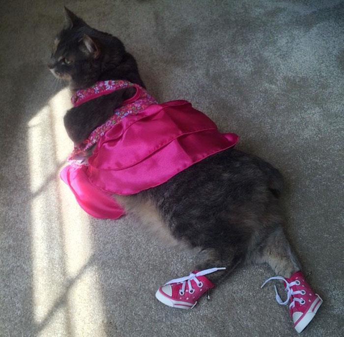 mezuniyet-kedi-ile-giden-genc-sam-ruby-2