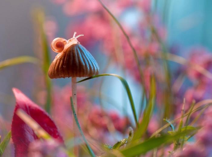 rüya-fotografcisi-sanat-rengarenk-cicek-böcek1