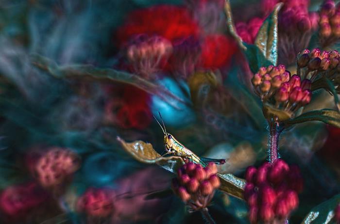 rüya-fotografcisi-sanat-rengarenk-cicek-böcek2