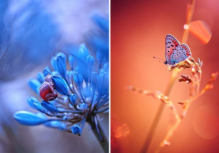 rüya-fotografcisi-sanat-rengarenk-cicek-böcek4