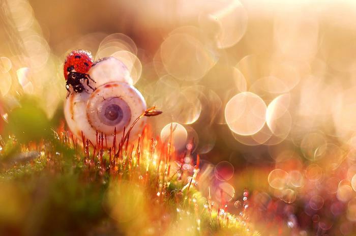 rüya-fotografcisi-sanat-rengarenk-cicek-böcek8