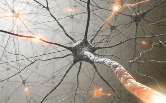 sinetinezi-beyin-nöronlar