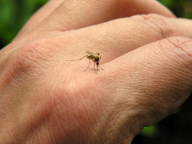 sivrisinek-ısırığı
