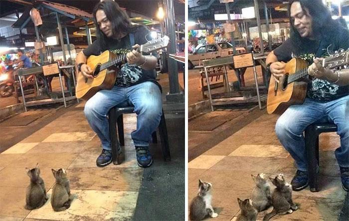 sokak-müzigi-kedi-yavrulari-sokak-sanati-gitar