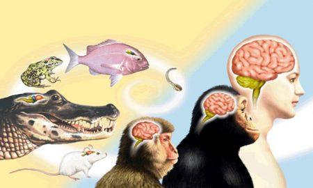 tum-canlilarin-beyinleri