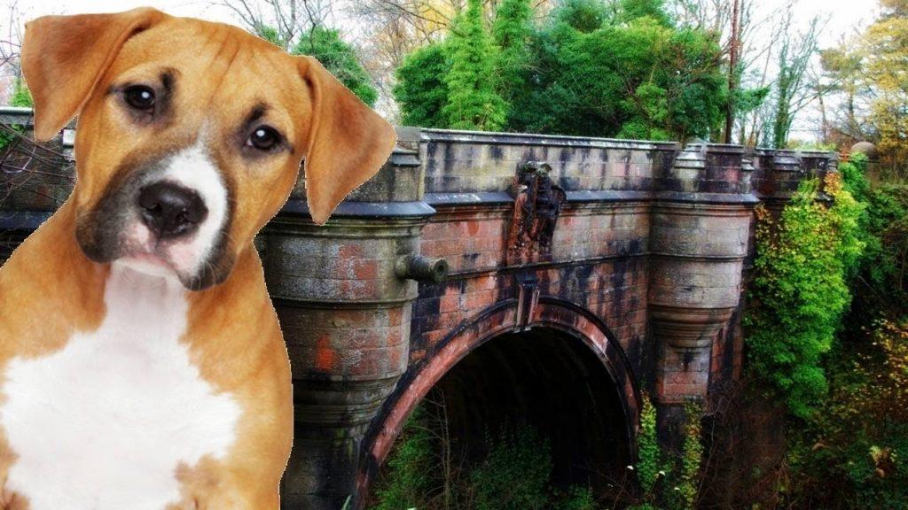 intihar eden köpek