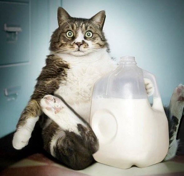 kediler ne tür süt içmeli