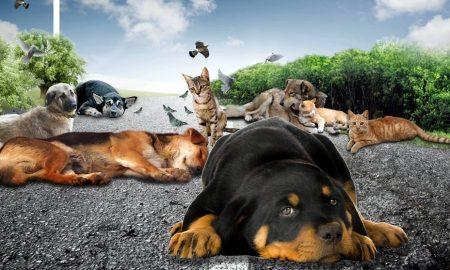 sokak hayvanları için ne yapmamız lazım