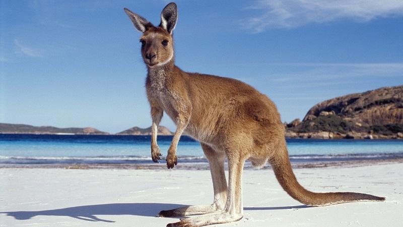 kanguru-trex-geyigi